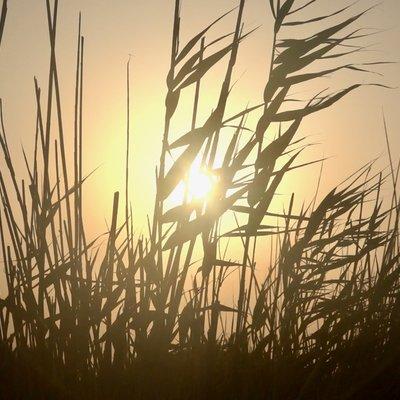 Das Foto zeigt Gras und Getreidehalme vor der untergehenden Sonne.