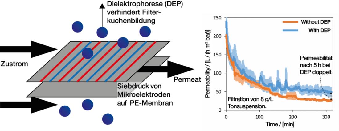 Skizze der Membranfilter, Mikroelektroden werden per Siebdruck auf Membranfilter aufgebracht und erzeugen eine Kraft, die Partikel von der Ablagerung auf der Membran abhalten. Die Permeabilität als Funktion der Zeit sinkt bei DEP-funktionalisierten Membranen weniger stark ab als bei nicht funktionalisierten. Nach 5 Stunden Laufzeit ist die Permeabilität der DEP-Module doppelt so hoch wie die der unfunktionalisierten Module.