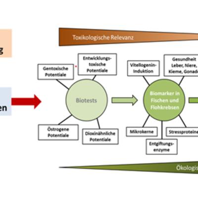 Im Rahmen des Projekts SchussenAktivplus konnten nach Ausbau einer Kläranlage mit einer 4. Reinigungsstufe auf Basis von Pulveraktivkohle plausible Zusammenhange zwischen (a) der Reduktion von Spurenstoffen und (b) positiven Effekten im Ökosystem des angeschlossenen Vorfluters Schussen gezeigt werden. Dieser Erfolg des Ausbaus der Kläranlage ließ sich mit Hilfe von Biotests, die im Labor mit Umweltproben durchgeführt wurden, ebenso wie durch Untersuchungen von unterschiedlichsten Gesundheitsmarkern (Biomarkern), die an im Ökosystem exponierten Organismen getestet wurden, sowie in ganzen Populationen im Freiland nachweisen.